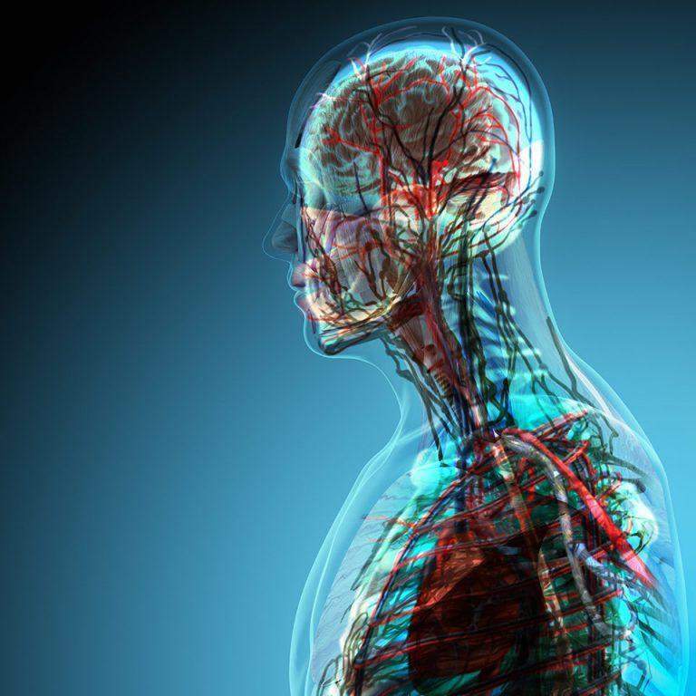 حقائق سريعة عن علم الفسيولوجي