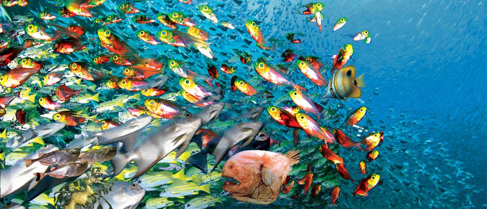 Photo of أفضل أنواع السمك… معلومات عن أفضل لحوم الأسماك وأسوأها