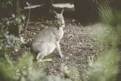 Photo of تعريف علم الثدييات
