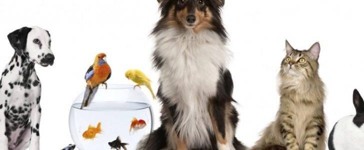 Photo of معلومات عامة عن الحيوانات الأليفة