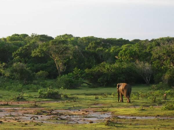 Photo of المسافر المنفرد إلى سريلانكا