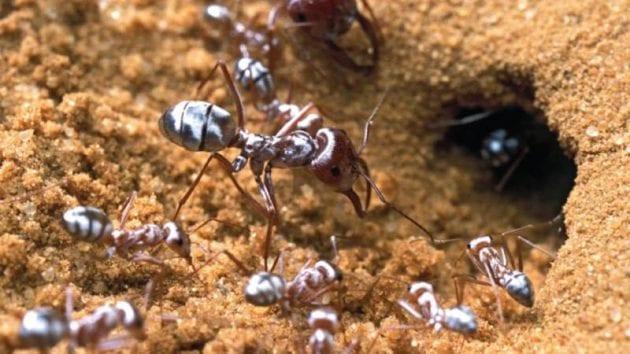 رؤية النمل في الحلم