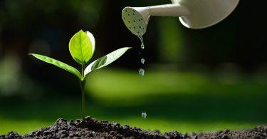 بحث عن النباتات الطبيعية