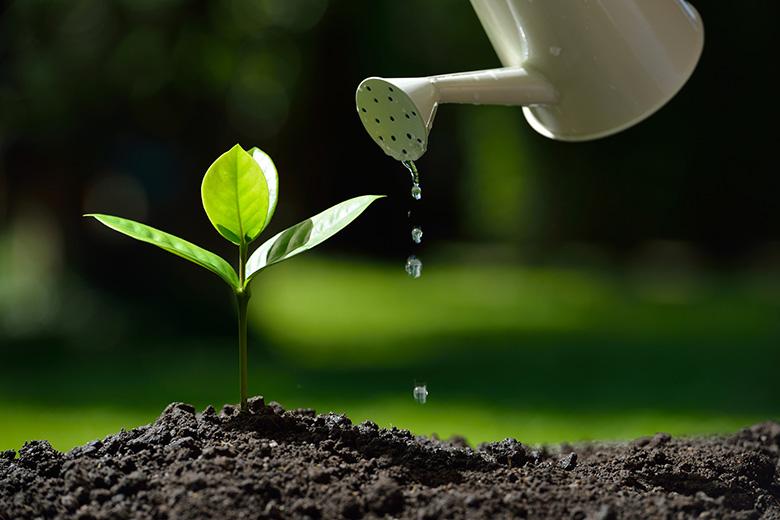 Photo of بحث عن النباتات الطبيعية