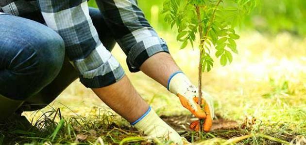 بحث عن الزراعة بالعناصر الرئيسية