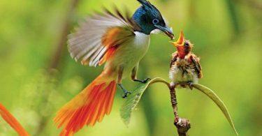 موضوع تعبير عن أهمية الطيور بالعناصر الرئيسية