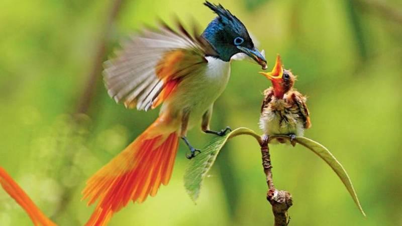 Photo of موضوع تعبير عن أهمية الطيور بالعناصر الرئيسية
