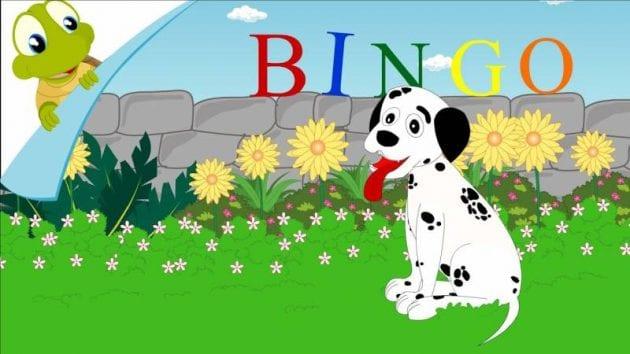 بيت بنغو - Pet Bingo