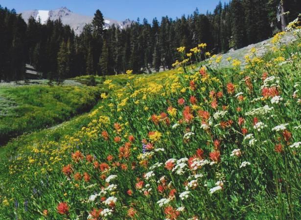 Photo of بحث عن النباتات الطبيعية بالعناصر الرئيسية