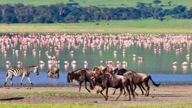 Photo of السفر إلى تنزانيا منفردا