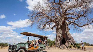 Photo of مخاطر السفر إلى تنزانيا