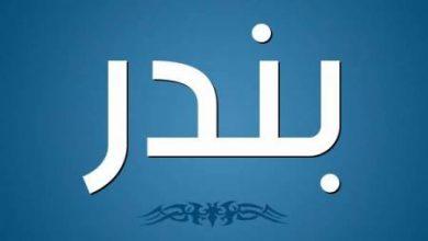 Photo of معنى اسم بندر وأصله