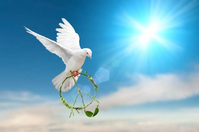 Photo of موضوع تعبير عن اهمية السلام كامل