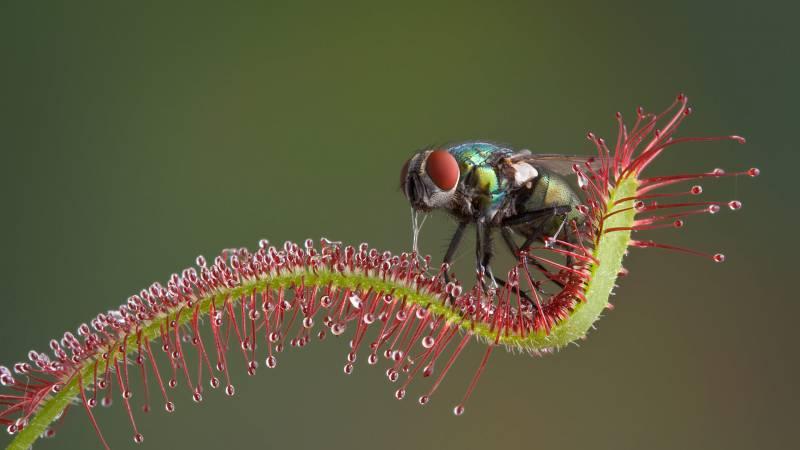 موضوع تعبير عن نباتات تصيد الحشرات كامل