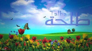Photo of معنى اسم طلحة وصفاته