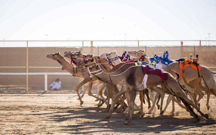 معلومات عن صحراء المرموم في دبي