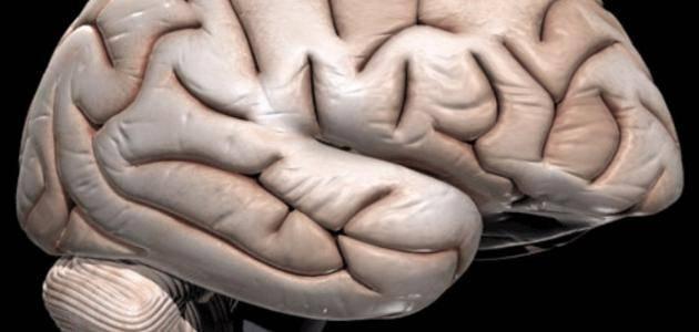 ادوية علاج ضمور المخ