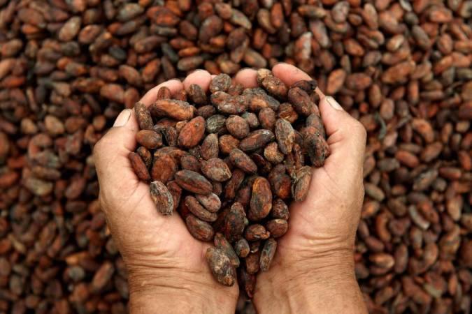 أفضل أنواع الكاكاو