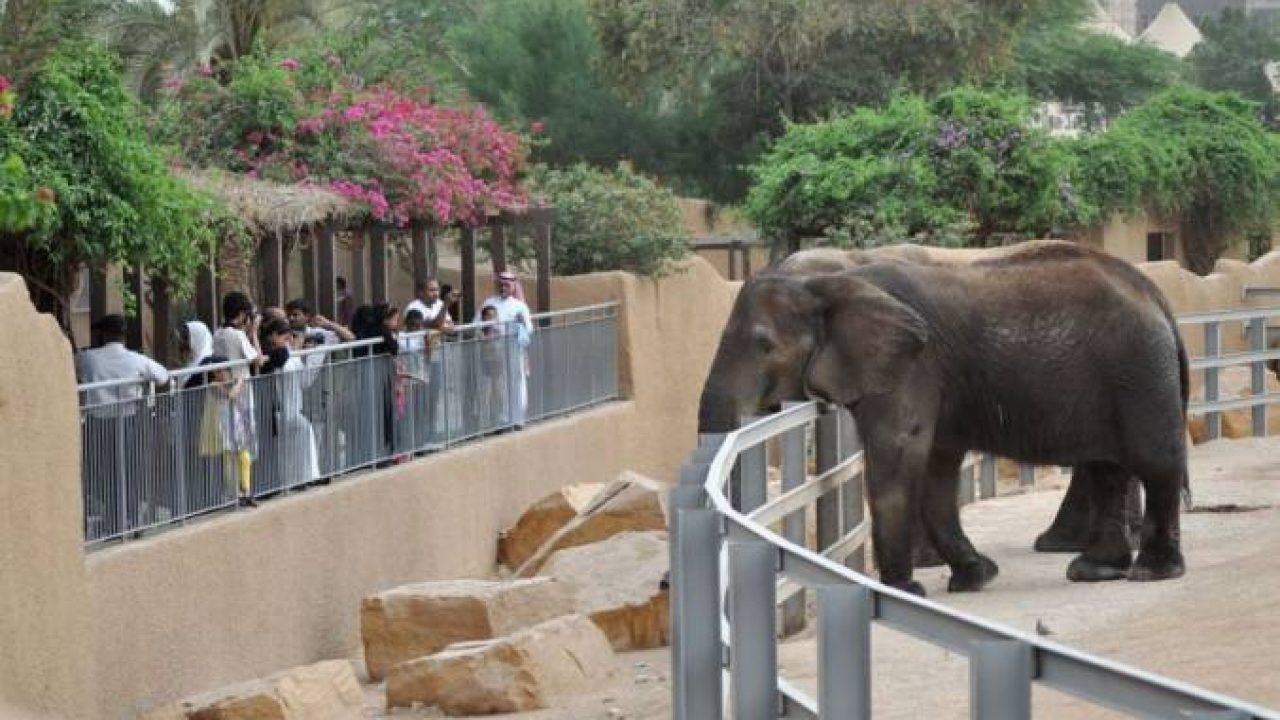 معلومات عن حديقة حيوانات الرياض موقع معلومات