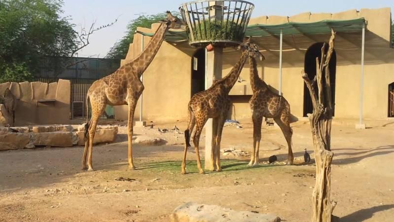 معلومات عن حديقة حيوانات الرياض