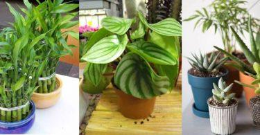 أفضل أنواع النباتات المنزلية