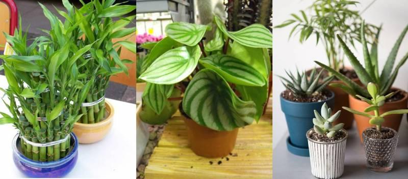 صورة أفضل أنواع النباتات المنزلية