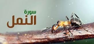 سبب تسمية سورة النمل