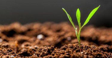 افضل انواع التربة