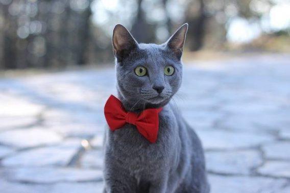 افضل انواع القطط للمبتدئين