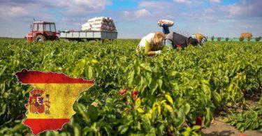 العمل في مزارع اسبانيا