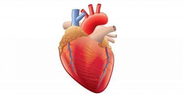 أمبولات بريفيبلوك Brevibloc لعلاج الصدمة القلبية