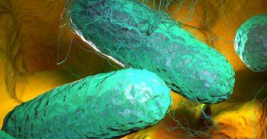 هل مرض التيفود خطير