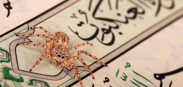 فوائد من سورة العنكبوت