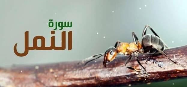 فوائد من سورة النمل