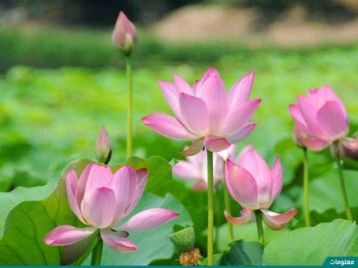 أفضل أنواع الزهور