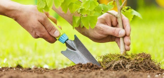 أحاديث عن زراعة الاشجار