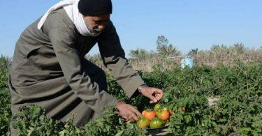 أشهر المنتجات الزراعية السعودية
