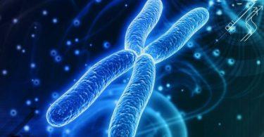 العلاقة بين الكروموسومات والكروماتيدات