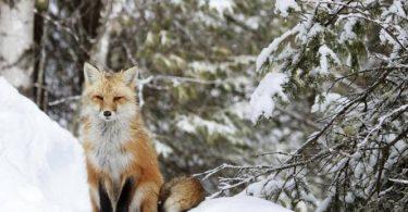 كيف تحصل الحيوانات على طعامها في الشتاء