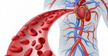 مكتشف الدورة الدموية الصغرى