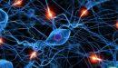 انتقال السيال العصبي عبر الشق التشابكي