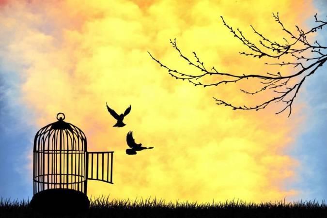 أهمية الحرية في حياة الفرد والمجتمع