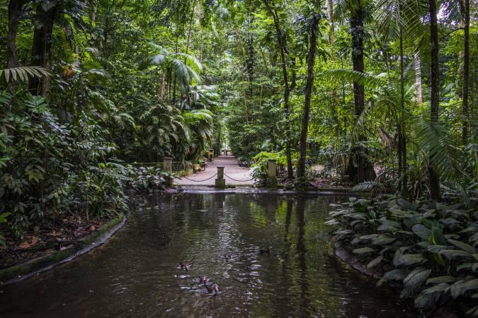 السياحة في غابات الأمازون 1