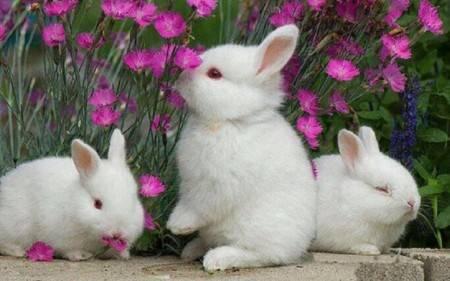 حلم الأرانب