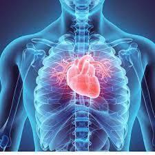 عدد شرايين القلب