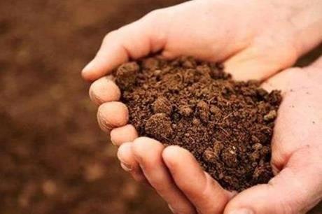 رؤية الطين في الحلم
