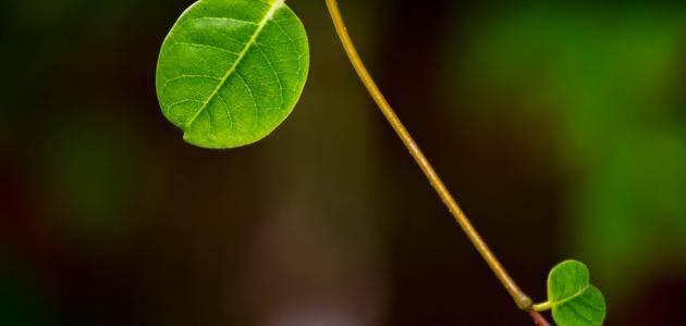هل تعلم كيف تتنفس النباتات في الليل